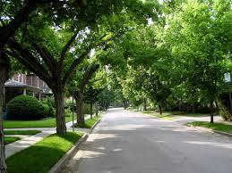 treed street