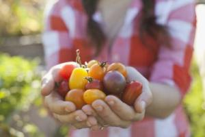 Close up of woman holding cherry tomatoes