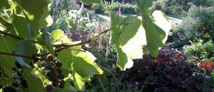 Keremeos garden